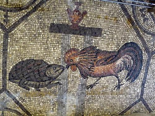 Il gallo e la tartaruga (il bene e il male) lottano tra loro