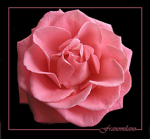 L'e Pink by Franomilano