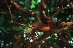 (Daniel Pascoal) Tags: film analog 35mm fuji pentax sjc filme saojosedoscampos parquedacidade pentaxme danielpg fujiqualityii100 danielpascoal