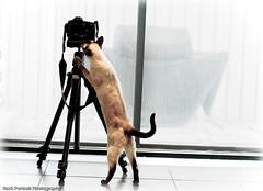 Cats at Camera