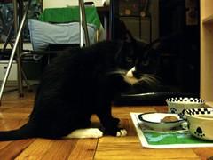 Bootsie Cat