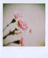 (+ Chi +) Tags: flower polaroid sx70 600 closeuplens ndfilter