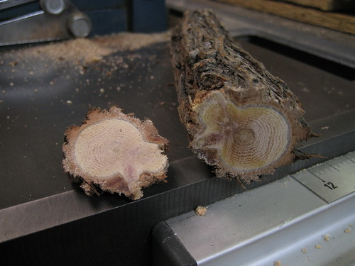 Bottlebrush limb cross section