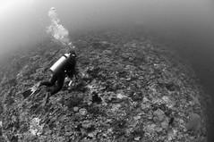 AMBO200903030257 (Matthew Oldfield) Tags: bw indonesia divers underwater wideangle maluku ambon kilang