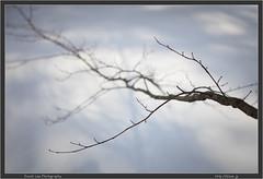 Fukushima Branch