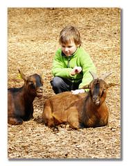 The touch (aviana2) Tags: animal children zoo touch goat ljubljana closeness sonyalpha100 challengeyouwinner aviana2 zooljubljana