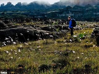 Someone, sometime, somewhere - Monte Roraima