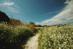I can see the white bird lead me to the new world. (Mayu) Tags: flowers blue sky clouds landscape spring path wideangle natures sigma1020mm nikond40