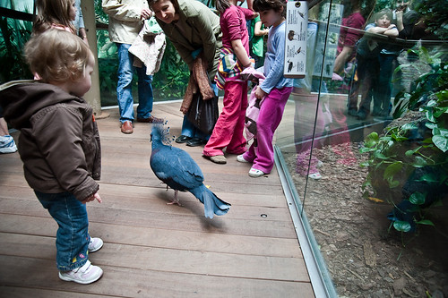 Central_Park_Zoo-19