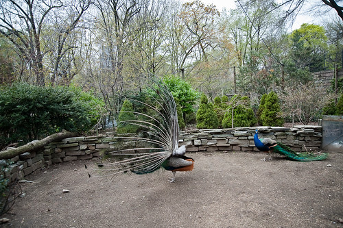 Central_Park_Zoo-27