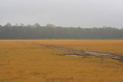 IMG_7776 (lifeontheedges) Tags: field delaware sussexcounty sussexcountydelaware