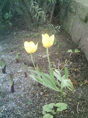 IMAG0093 (Ian Faz) Tags: flowers plants tress nessgardens