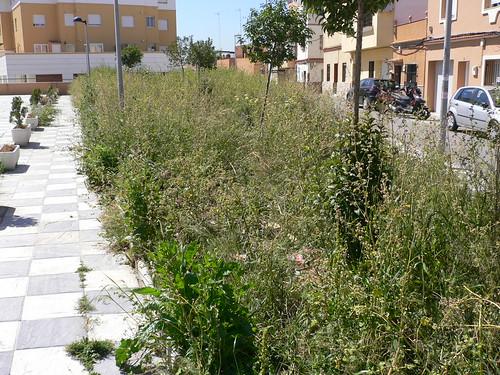 Maleza vs jardines