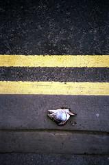 fish (steve marland) Tags: surrealism stockport gutter fishhead
