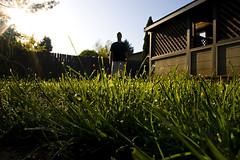 365 Day 114 (Steven Coen) Tags: morning light portrait sun house art wet grass self fence photography interesting creative sp dew steven 365 coen 365days