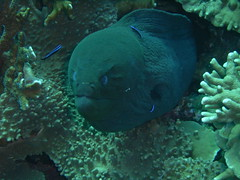 09. Moray Eel (taken by some German guy on our boat)