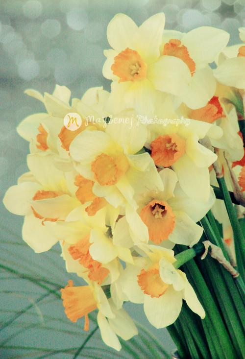 spring feeling 2