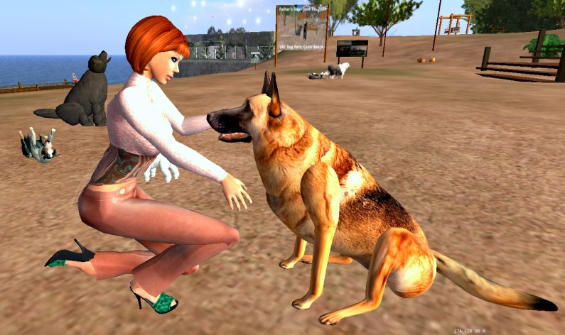 Canis Dog Park 2
