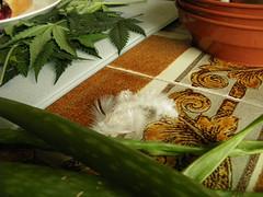 Accidental Altar IX (Ms. Graveyard Dirt) Tags: food home cooking gardening lol oops altars backroom