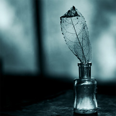 Silhouette (borealnz) Tags: blue light shadow window glass silhouette square 50mm leaf bottle bravo basement veins toned leafskeleton nff bsquare pentax50mmf17 borealnz
