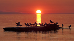 Sunrise & Seagulls (Mauricio Meja) Tags: morning sunset red orange cloud sun lake reflection bird nature water silhouette yellow wisconsin sunrise wow point dawn coast early wind dusk seagull peaceful tranquility lakemichigan serenity serene wi tranquil cloudscape racine windpoint flickrphotoaward naturewatcher naturessilhouette