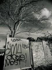 fitzroy gothic #4 (mugley) Tags: old winter blackandwhite bw tree brick 120 film overgrown rollei mediumformat graffiti alley 645 suburban decay bare branches fitzroy grain australia melbourne tags victoria negative lane emu epson suburbs walls polarizer 6x45 r3 mamiya645 climbers corrugatediron urbanlandscape redfilter moist polariser hsg 25a id11 v700 mamiya645protl ilfotec m645 rolleir3 sofer 35mmf35sekorn forgetexactlywhere orgeys offfitzroyst taggershaveminusculenobs