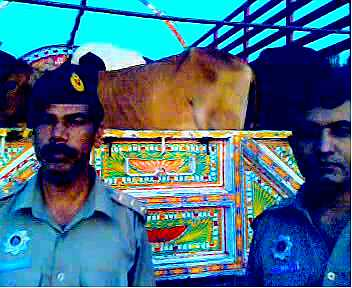 Motorway Police Arrests Dacoits