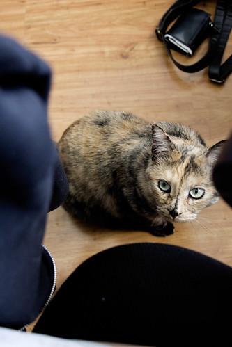 Meow [176/365]
