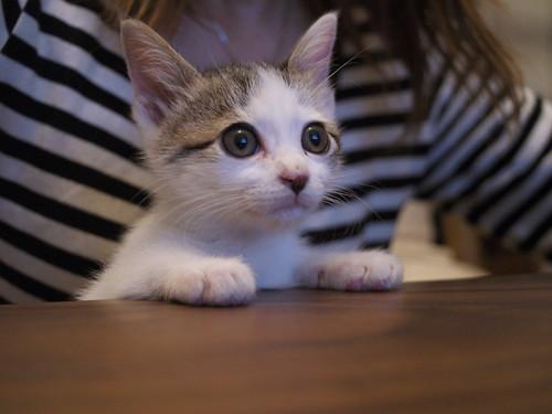 TVを見る猫