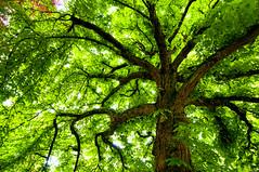 [フリー画像] 自然・風景, 樹木, グリーン, 201105251900