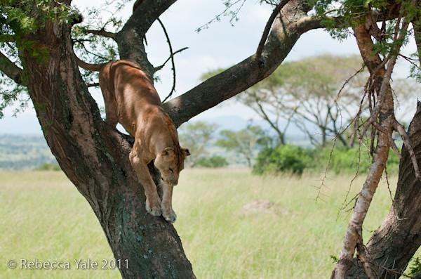 RYALE_Rwanda_Uganda_Safari-306