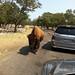 Natural Bridge Wildlife Ranch, San Antonio, Texas