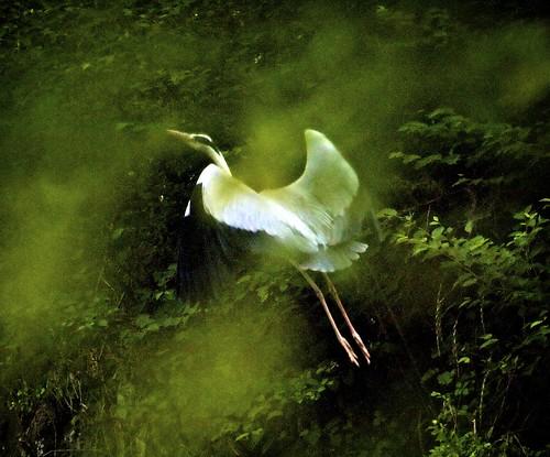 Angelic heron