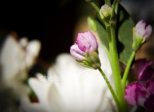 Flower 09_004blog