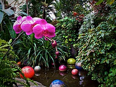 Annie's Pond at Franklin Park Conservatory (b+USD image design) Tags: franklinparkconservatory koipond phalaenopsisorchid anniespond dalechihulyglass canong10