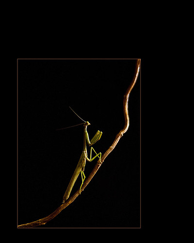 mantis blog