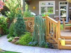 Beautiful Patio (boisebluebird) Tags: garden michael landscaping boise patio deck walkway decks pathway toolson weepingblueatlascedar favoritegarden northendboise boisegardens michaeltoolson boisebluebird boisebluebirdcom httpwwwboisebluebirdcom boiselandscaping boisegardener