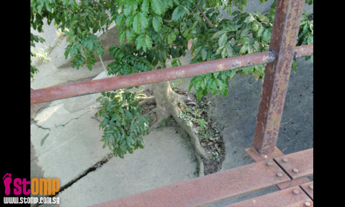 Danger: Growing tree roots can crack wall of river bank