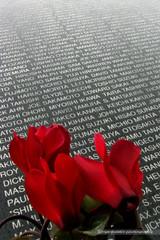 Flowers (mambastic photography (aka mamba909)) Tags: laphotocontest09