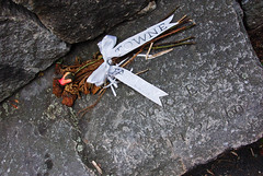 DSC_1481 (mdpayne) Tags: fall boston ma picis october2007