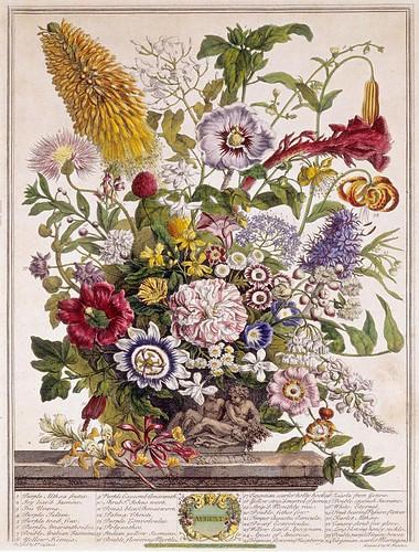008- Agosto- Los doce meses del año en flores