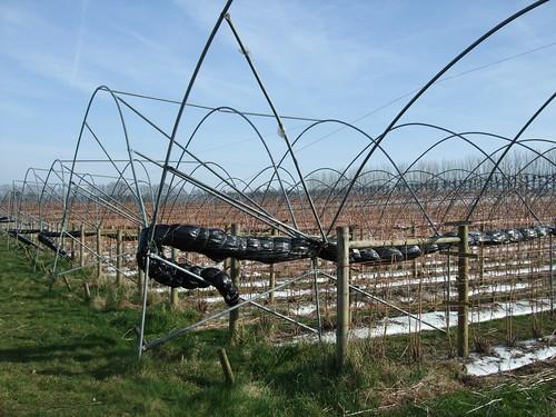 orchards-wrothamheath