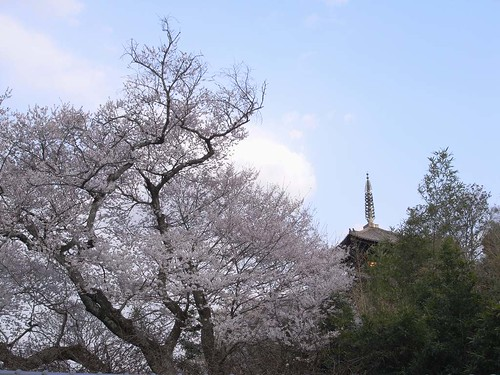 2009年-桜@当麻寺-03