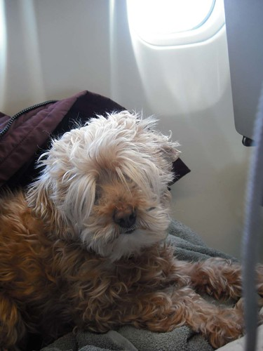 Bailey on the plane
