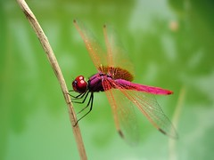 4 dragonfly (scy ( busy ...... post n run) Tags: updatecollection