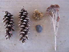 Collecting (Stephanie Caldwell) Tags: brown nature stone weed natural tan collection pebble pinecones beenest foundoutdoors
