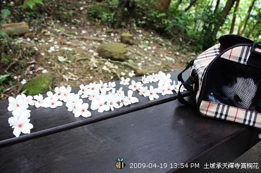 09.04.19小飛鼠Meiz土城賞桐花 (8)