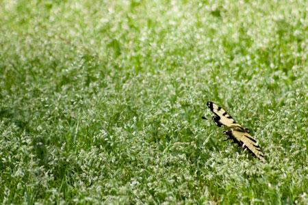 Butterfly_042309_0003web