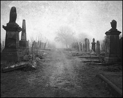 Path of Glory (Cul 9) Tags: trees mist graveyard fog path headstones tombstones southshields gravestones seafret blackwhitephotos westoecemetery unlimitedphotos