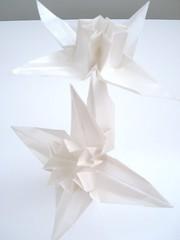 edelweiss II